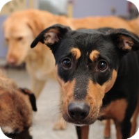 animal_shelter.png