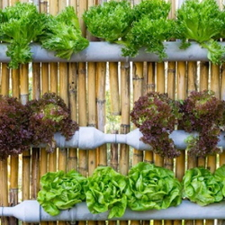 Vertical gardening containers on a fence.