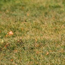 dog runs on fall lawn
