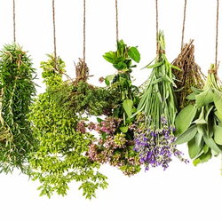 Mixed herbs hanging upside down.