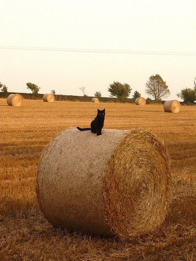 haybale with cat