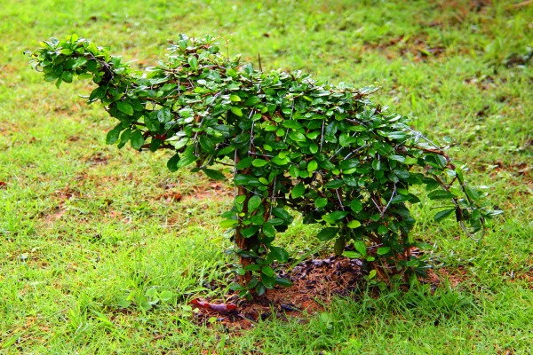small elephant shrub