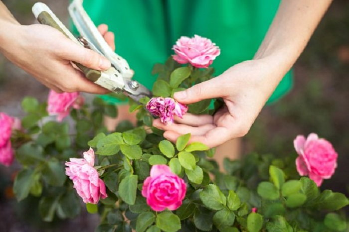Pruning dying flowers