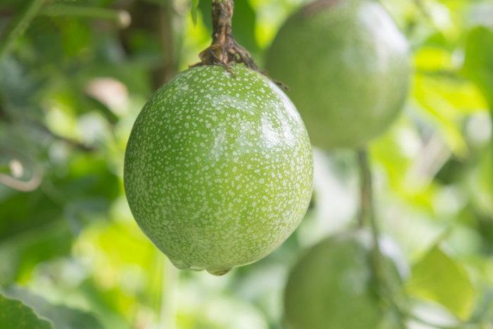 Unripe passion fruit