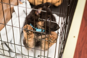 Dog Crates: A Guide to Proper Sizing