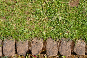 How to Install Paver or Stone Landscape Edging
