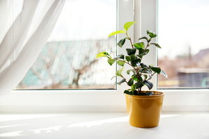 7 Ultimate Window Cleaning Tips