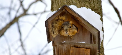 3 Homemade Recipes For Squirrel Repellent