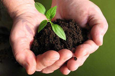 Organic soil preparation for Soil yourself