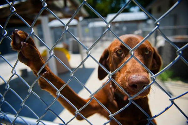 How To Start A Dog Rescue Shelter