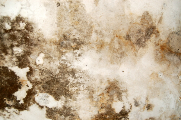 How To Get Rid Of Mold Under The Sink Doityourself Com