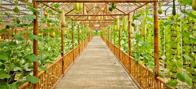 Build Your Own Greenhouse : Build your own greenhouse materials doityourself