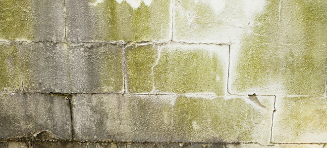9 Tips for Preventing ... Cladosporium Mold On Wall