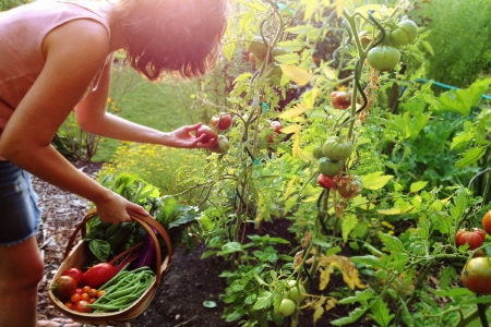 Answers to vegetable fruit and herb gardening questions for Gardening questionnaire