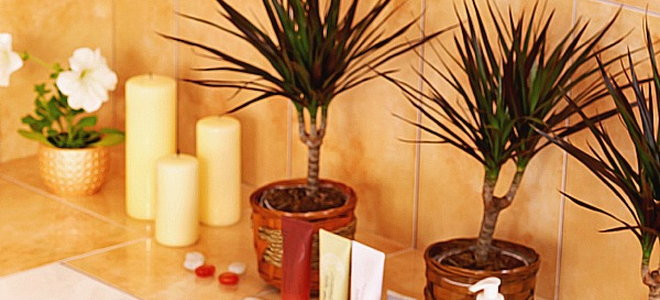 Create A Tropical Themed Bathroom With Plants That Love Humidity Part 69