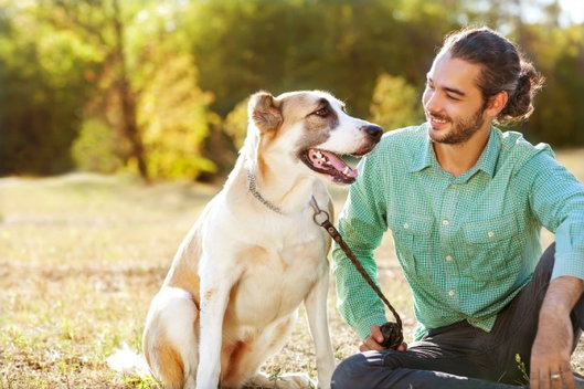 Pet-Friendly Rehabs: Why They Can Help