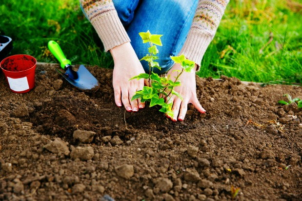 Benefits of Gardening in Recovery