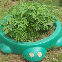 Turtle sandbox with tomatoes and dill
