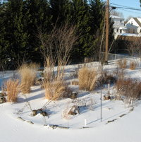 A fairly deep snow over the prairie garden in 2006