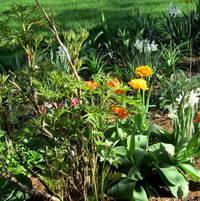 Tree Peony and tulips