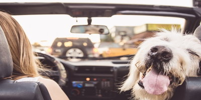 Dog-Friendly Features For Your Car