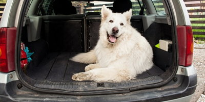 What is the Best Used Car to Buy for Big Dogs?
