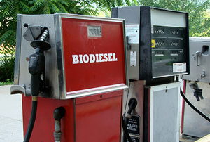Biodiesel fuel choice