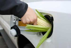 holding a corn cob in a gas tank to represent ethanol