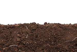 Soil on a white background.