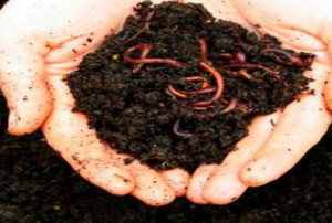 hands holding dirt and worms