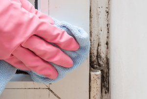 Gloved hand cleaning mold