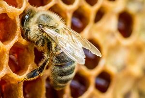 A bee.
