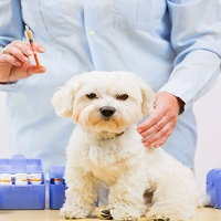 vaccine-reactions-in-pets