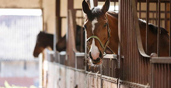 Image of a horse in the stall.