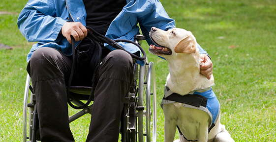 Image of an assistance dog and man in wheel chair.