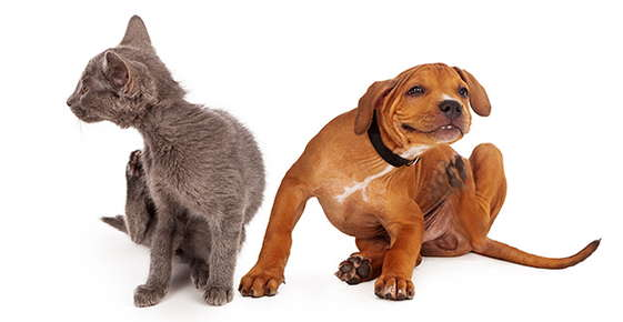 Image of a dog and cat scratching.