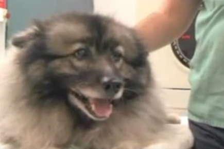 Image of fluffy dog panting.
