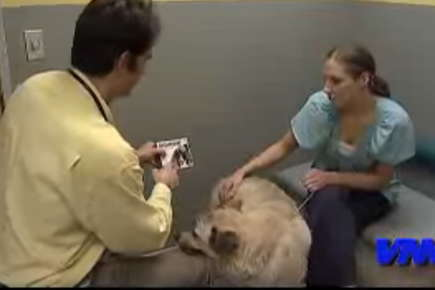Image of dog being held by a nurse while a doctor examines the dog.