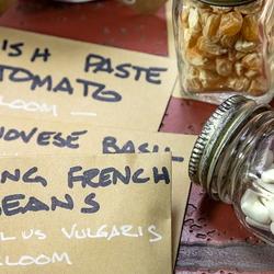 Saved seed in jars and envelopes