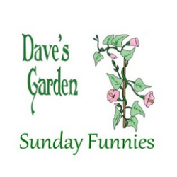 Dave's Garden vine and header logo for Sunday Funnies