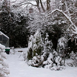 Snow covered winter garden