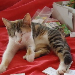 cat playing with seed packs