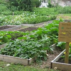 Urban community garden beds