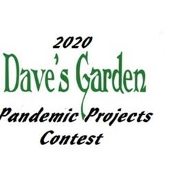 DG pandemic projects logo