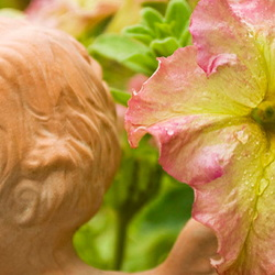 pink and yellow petunia with angel head sculpture