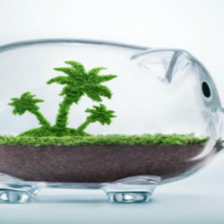 Glass Piggy Bank with Soil and Small Tree Inside
