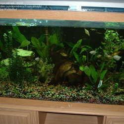 ... Aquarium Enjoy An Underwater Garden, Right In Your Own Livingroom!!