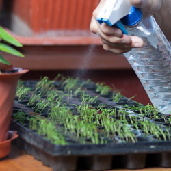 Watering seedling tray with a spray bottle