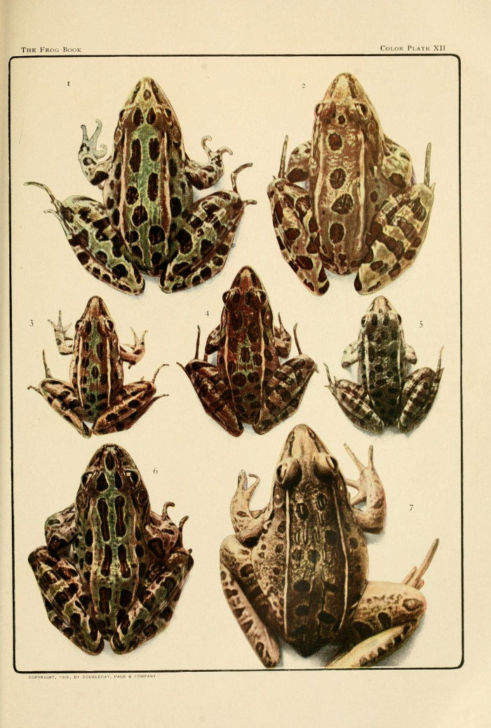 illustrations of types of toads