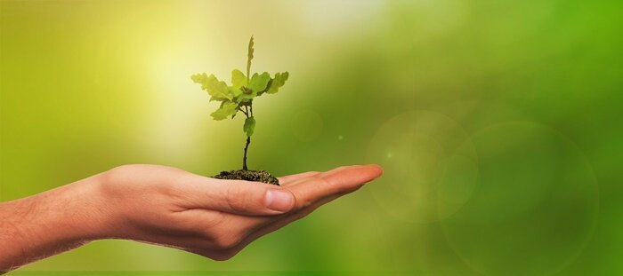 hand holding a tree seedling